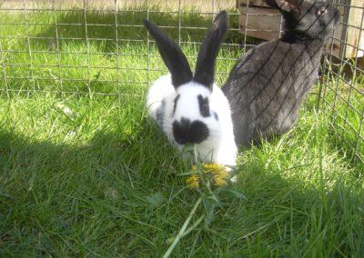 Ferienwohnung-Thiem-Garten-Kaninchen