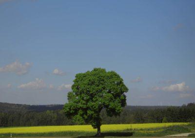 Ferienwohnung-Thiem-Umgebung-06